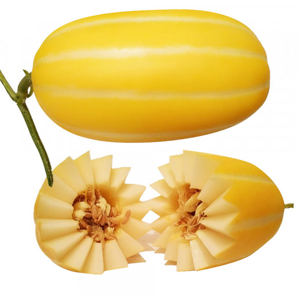 Korean Melon / 韩国黄金香瓜 - 1PC ~ 1LB