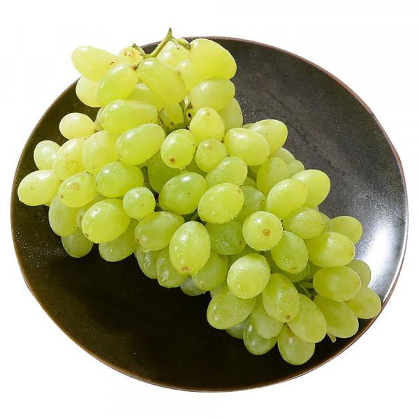 Green Grape / 无籽青提 ~ 1.2lb