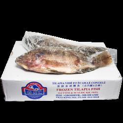 Frozen Tilapia Fish / 新鲜急冻金山侧