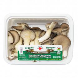 Organic Oyster Mushroom /  有机平菇 - 2盒