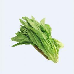 A-CHOY/ A菜(油麦菜) ~ 1.5LB