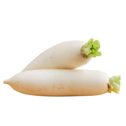 White Radish / 白萝卜- 1PCs