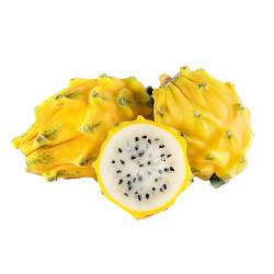 Yellow dragon fruit / 黄色火龙果 - 1PC