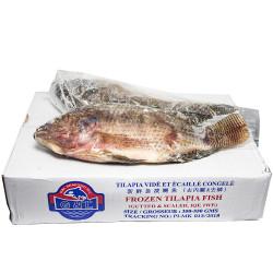 Frozen Tilapia Fish in Box / 整箱清肚金山侧 - 5lbs