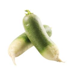 Green Radish/Lobok / 青萝卜 - 2个